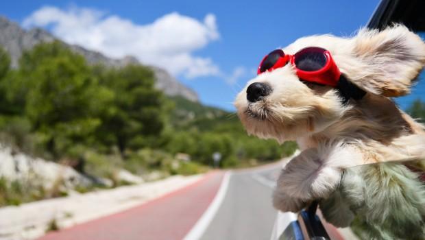 Tips jalan-jalan dengan hewan peliharaan tanya dokter hewan