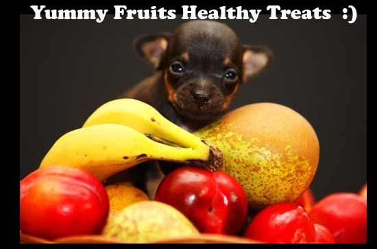 6 Buah Ini Dapat Menjadi Snack yang Menyehatkan bagi Anjing