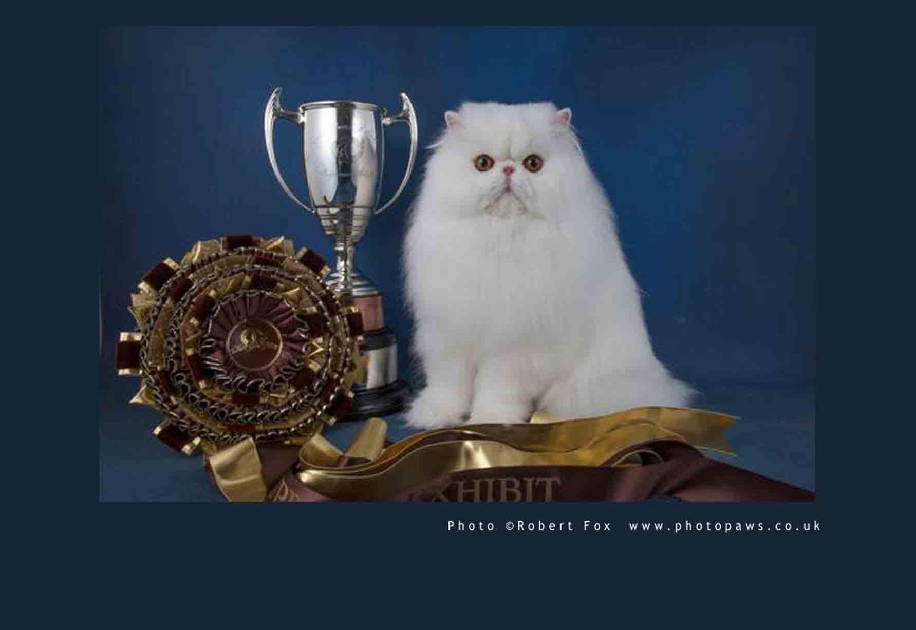 Kontes Kucing Tanya Dokter Hewan