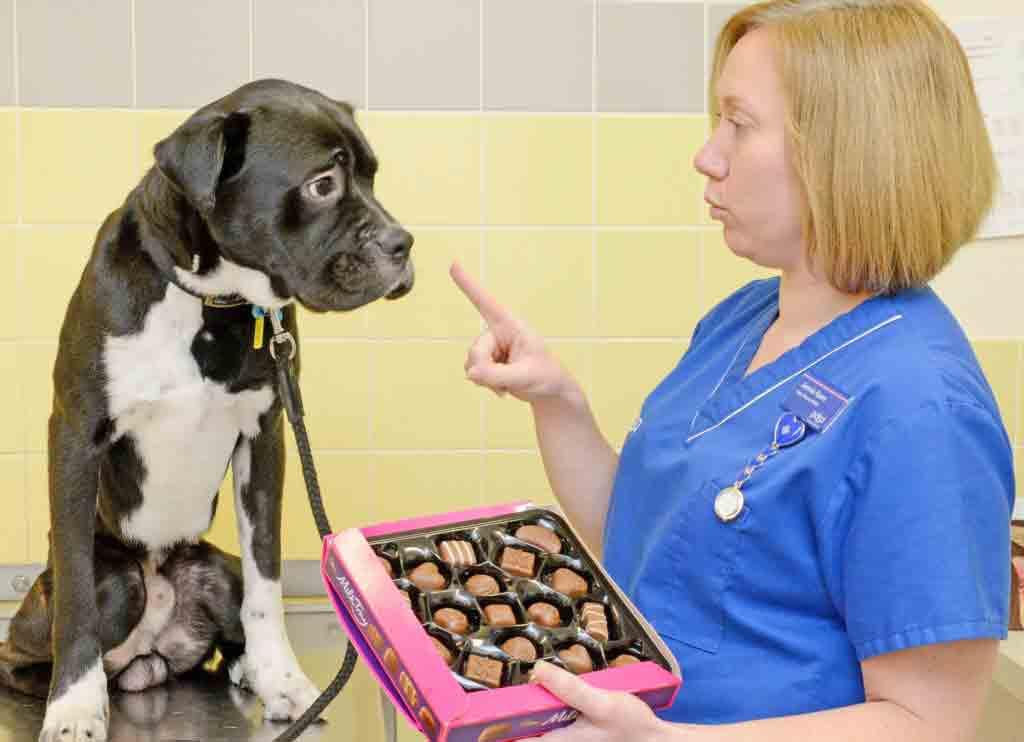 4 makanan berbahaya bagi Anjing dan Kuicng tanya dokter hewan