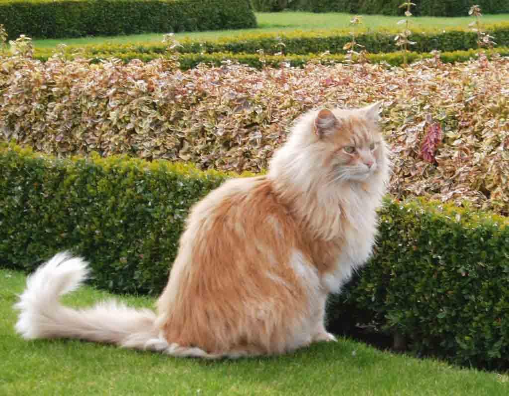 6 penyakit pada kucing tua tanya dokter