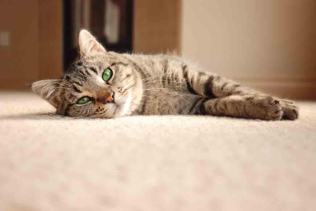 6 Tips Merawat Kucing Tua