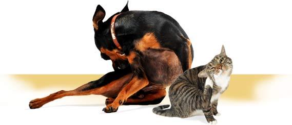 Kutu anjing dan kucing tanyadokter hewan