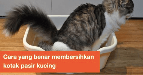Cara yang benar untuk membersihkan kotak pasir kucing