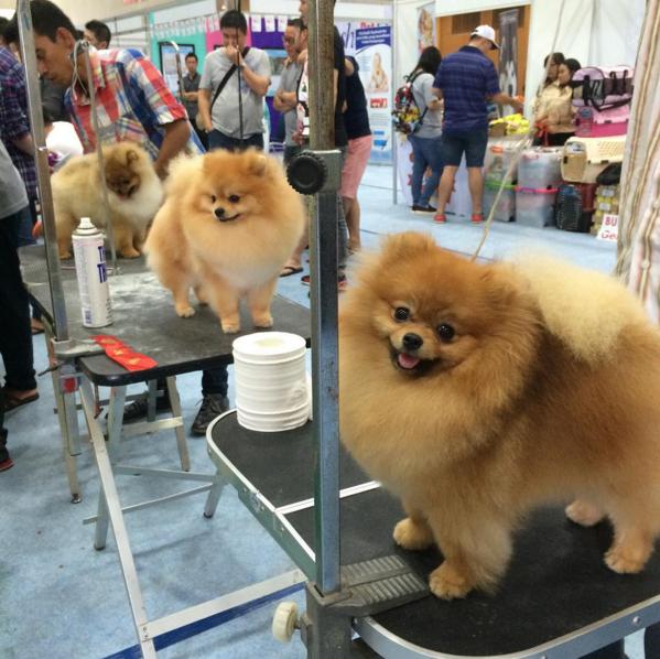 Jakarta Dog Show 2015