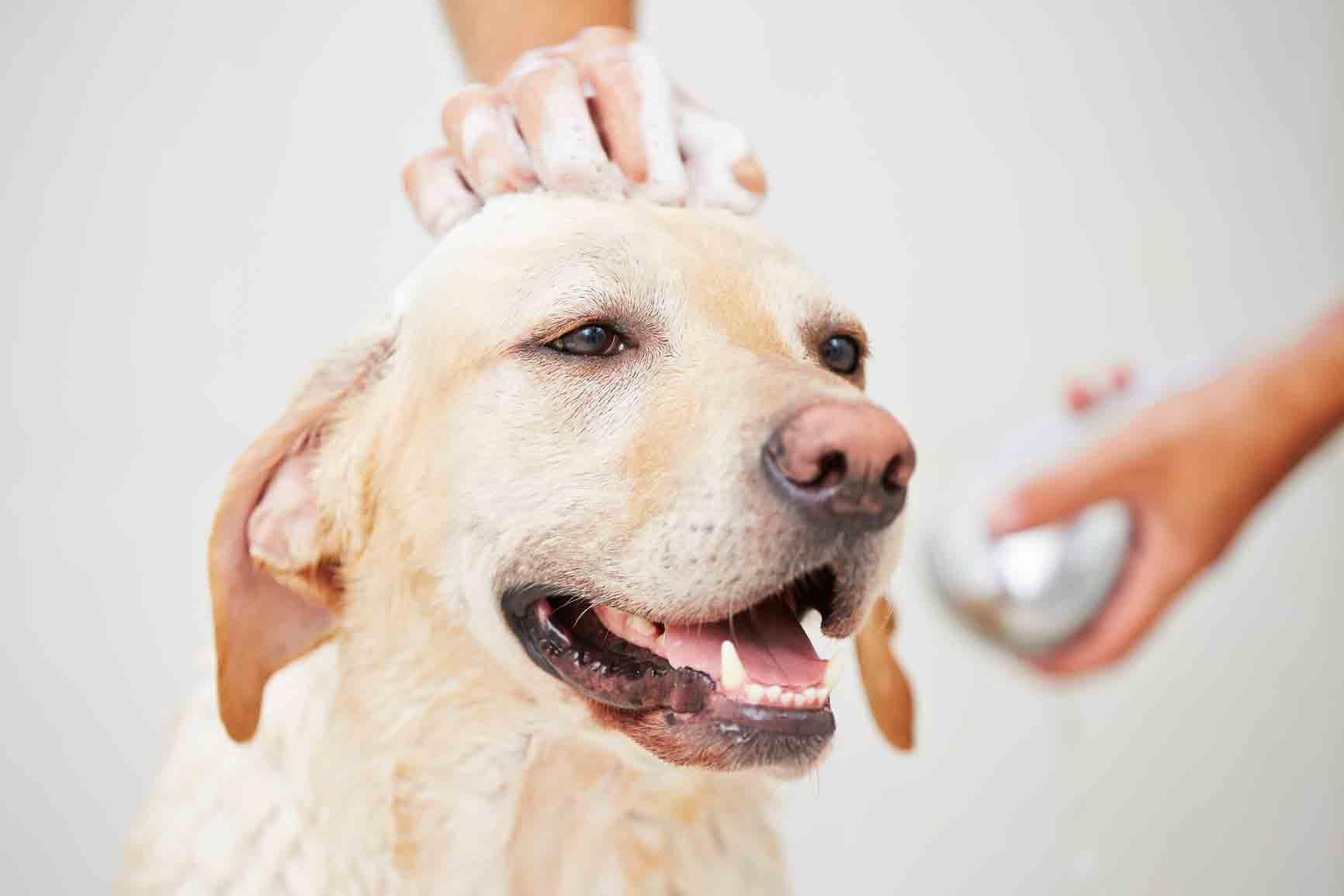 grooming anjing kucing;kucing mandi;anjing mandi
