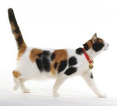 Ini Alasan Ilmiah Mengapa Kucing Belang Tiga Tidak Pernah Berusia Lama Tanya Dokter Hewan