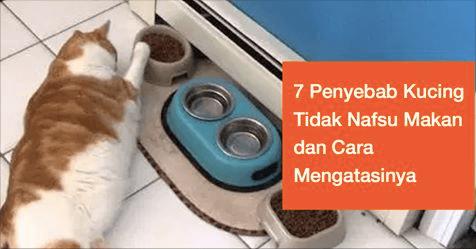 7 Penyebab kucing tidak nafsu makan dan cara mengatasinya