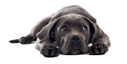 Penyebab Anjing atau Kucing Muntah