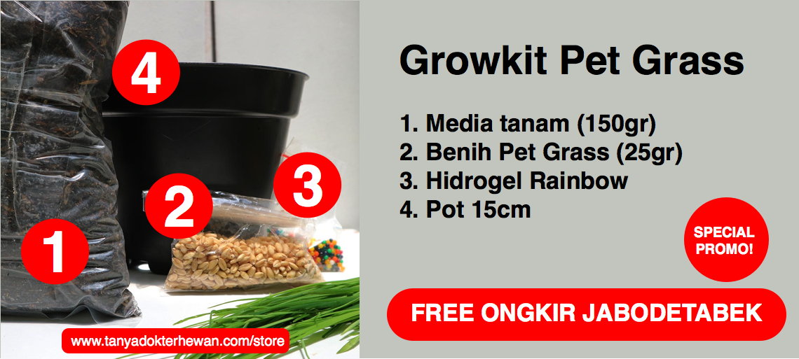 TDH Store - ?Paket Grow Kit Pet Gras