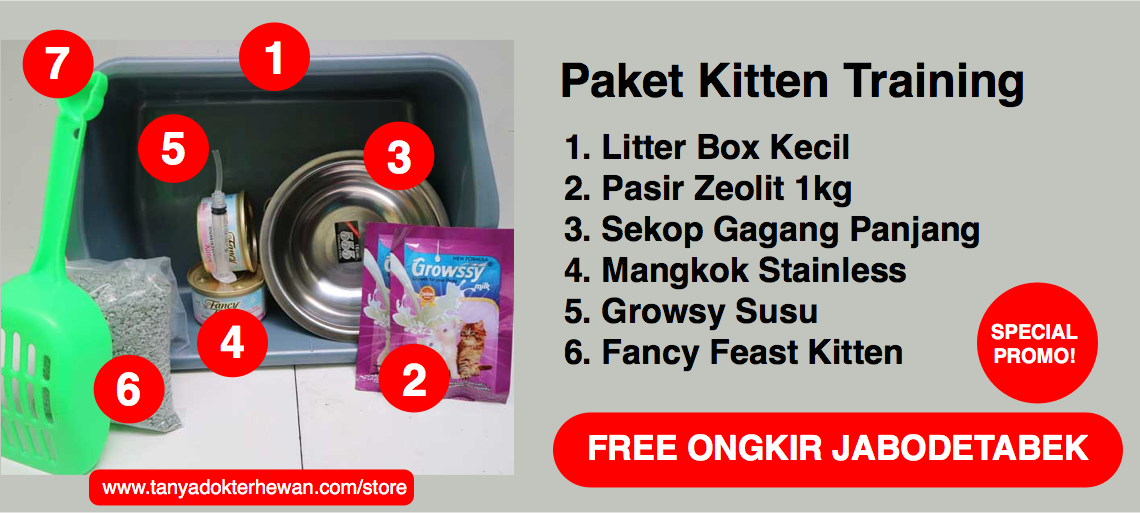 Paket Kitten Training
