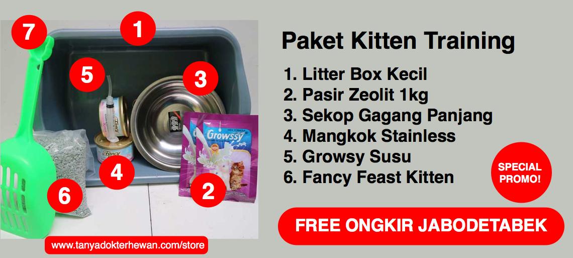 Paket Kitten Training