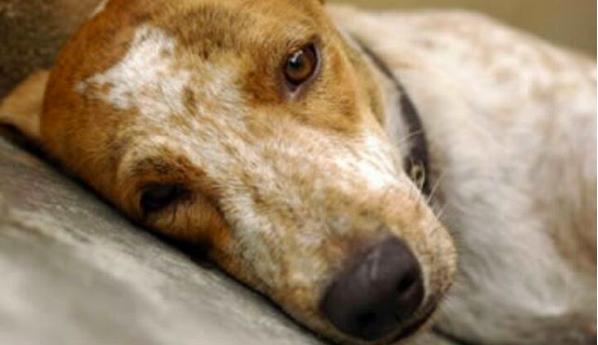 5 Penyebab Stress Pada Kucing dan Anjing
