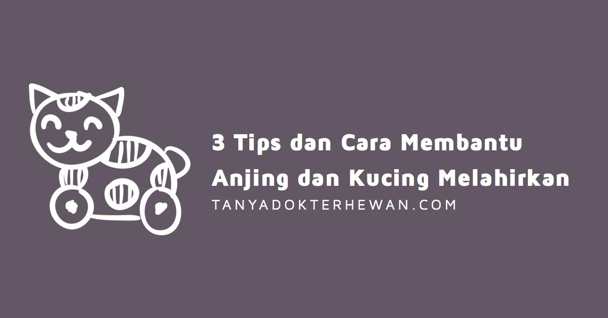 3 Tips dan Cara Membantu Anjing dan Kucing Melahirkan