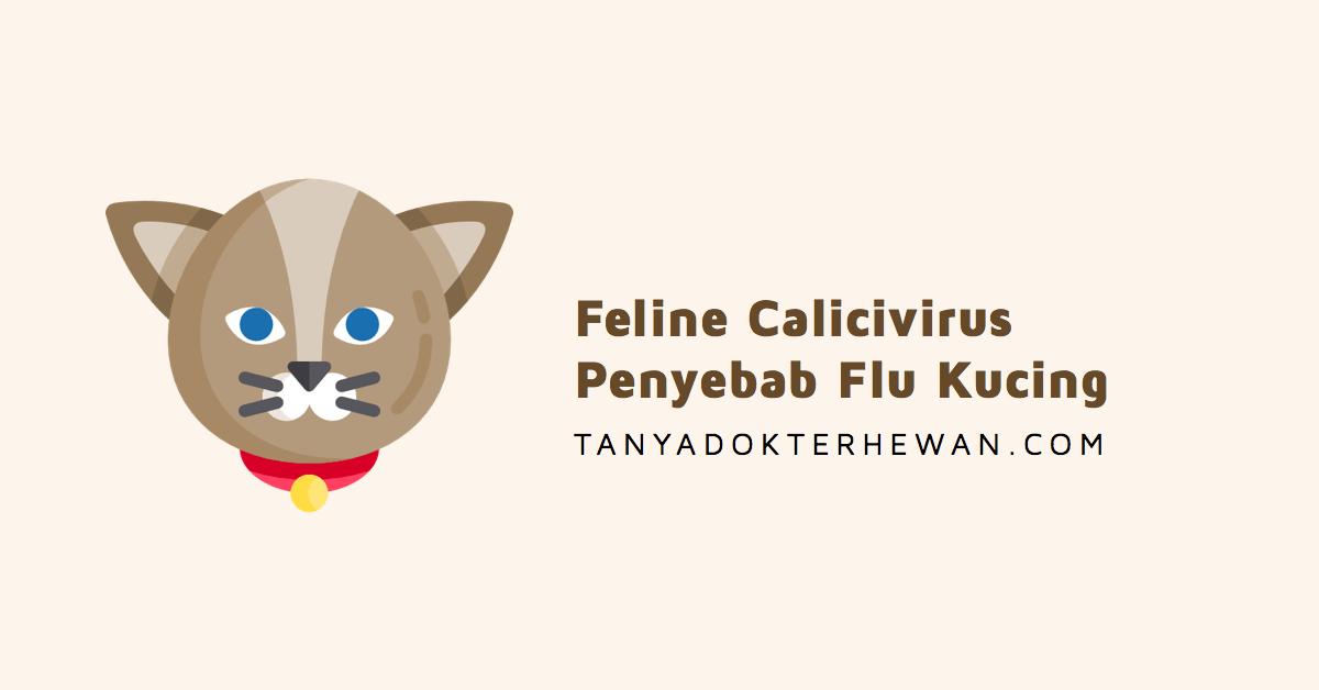 8 Gejala Penyakit Kucing Feline Calicivirus Penyebab Flu Kucing